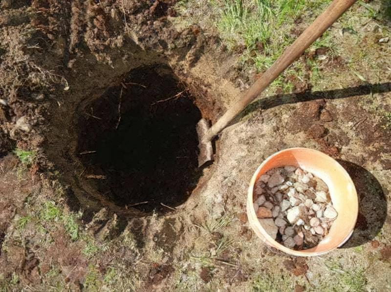 Садимо барбарис восени 2