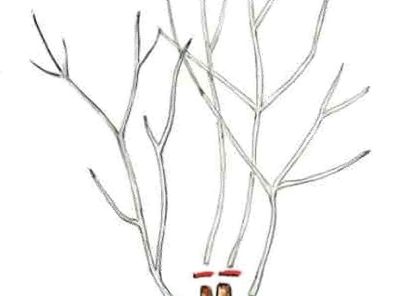 Садимо барбарис восени 5