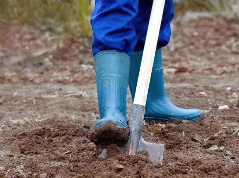 Портулак: як позбутися повзучого бур'яну в городі 2