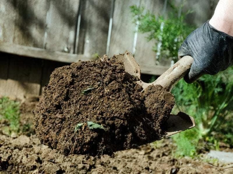 Сіємо петрушку на зиму і отримуємо ранній урожай зелені 3