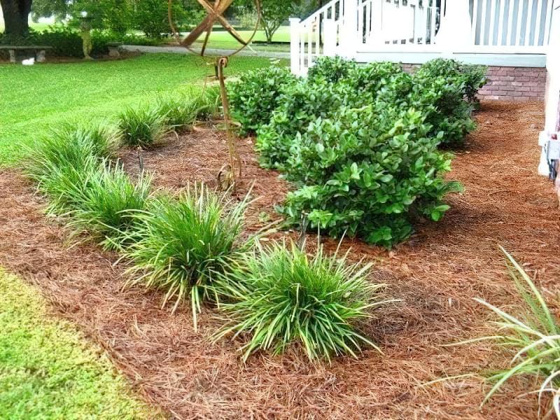 Як використовувати хвою в саду і городі? 2