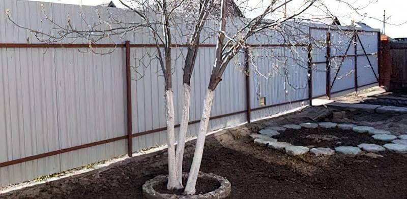 Захищаємо сад від гризунів