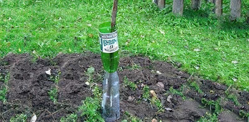 Пластикова пляшка - засіб від гризунів