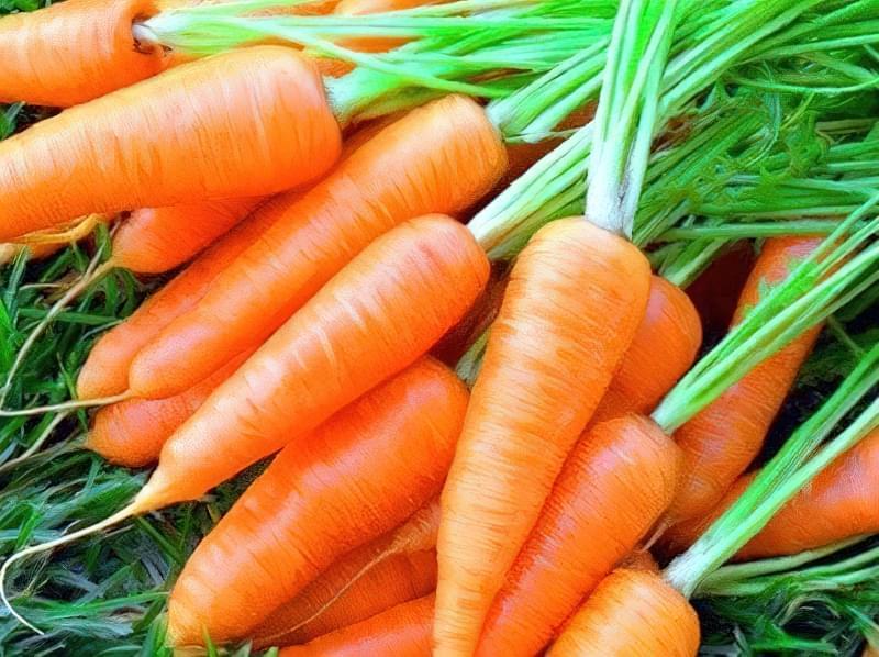 Як зберегти моркву в погребі до наступного врожаю 1