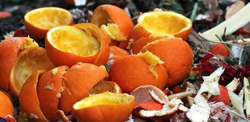 Чи вносити в компост цитрусові кірки