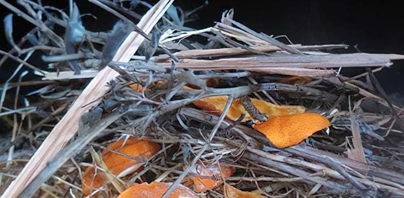 Сухі шкурки апельсина для розпалювання
