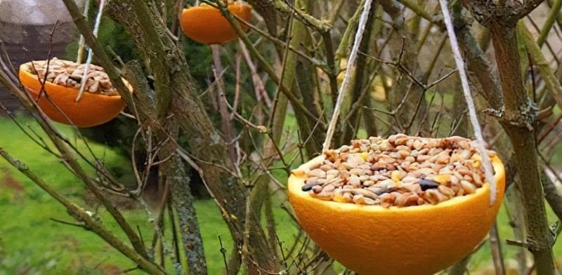 Як зробити годівницю для птахів з апельсина