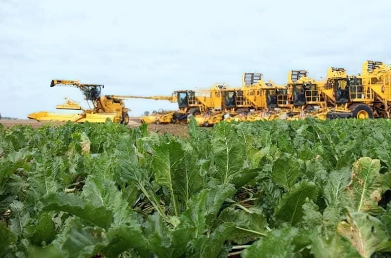 Прибирання цукрових буряків з поля