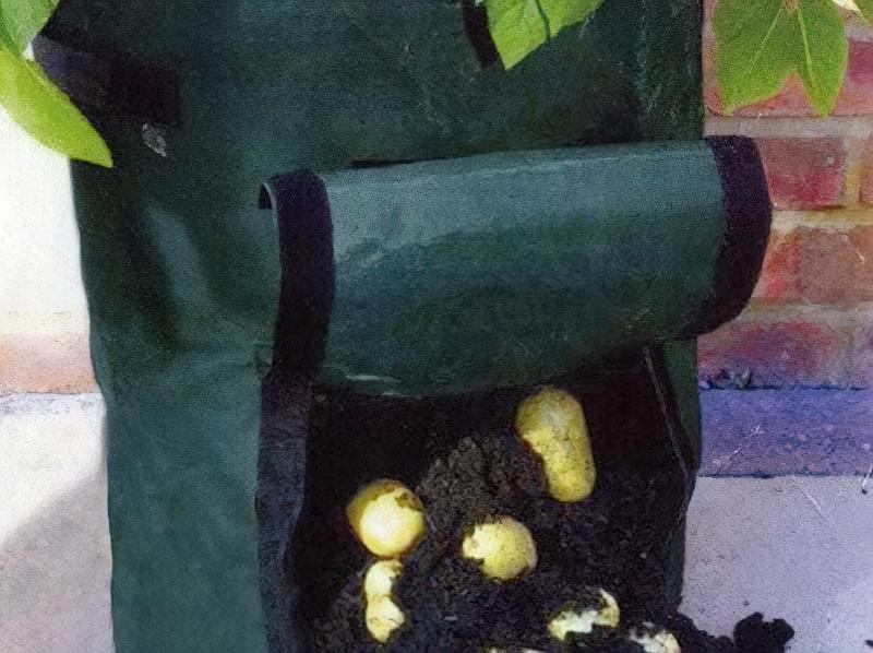 Картопля росте в мішку