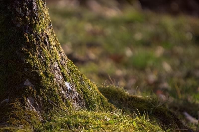Мох на деревах - користь, шкода, методи профілактики та боротьби 1