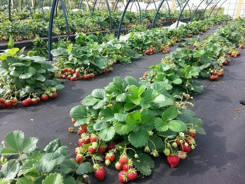 Що таке агроволокно і як його застосувати на присадибній ділянці 3