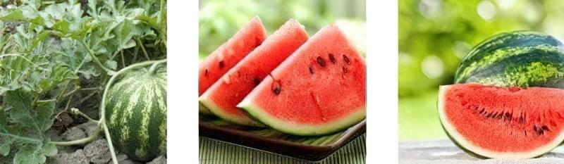 Що таке кавун – ягода, фрукт або все-таки овоч? 2