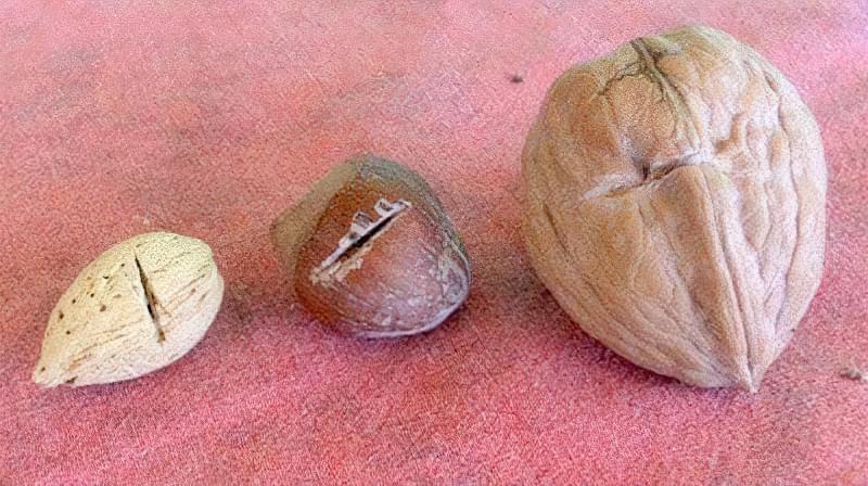 Скарифікація насіння — спосіб прискорити проростання, як проводити 2