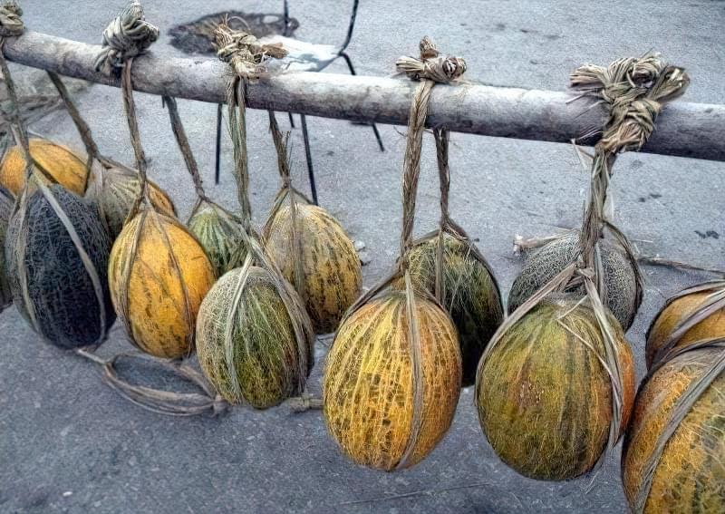 Плоди можна зберігати в підвішеному вигляді