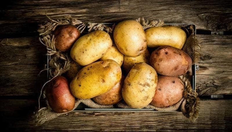 Чому гниє картопля при зберіганні, і як цього уникнути? 1
