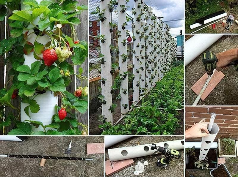Вертикальне вирощування дозволяє застосувати креативні ідеї