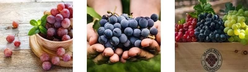 Виноград - це ягода або фрукт: визначення та теорії 2