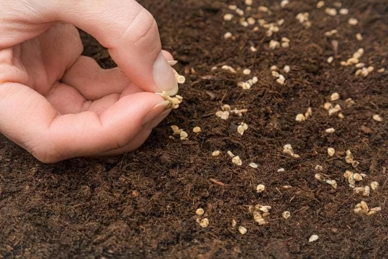 Вирощуємо томати без розсади - сорти, переваги і недоліки методу 2