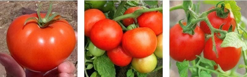 Вирощуємо томати без розсади - сорти, переваги і недоліки методу 5