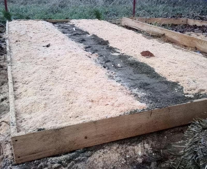Насіння кедра присипали шаром піску
