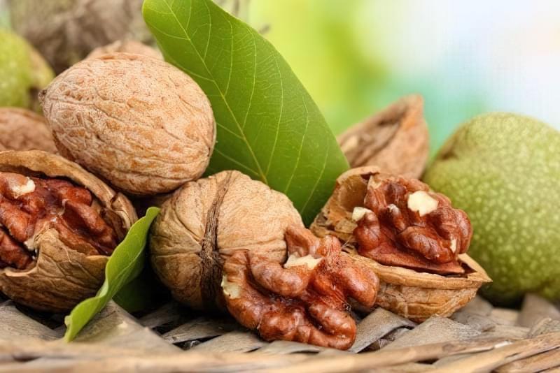 Як виростити волоський горіх з горішка? 1