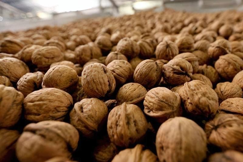Волоські горіхи в шкаралупі