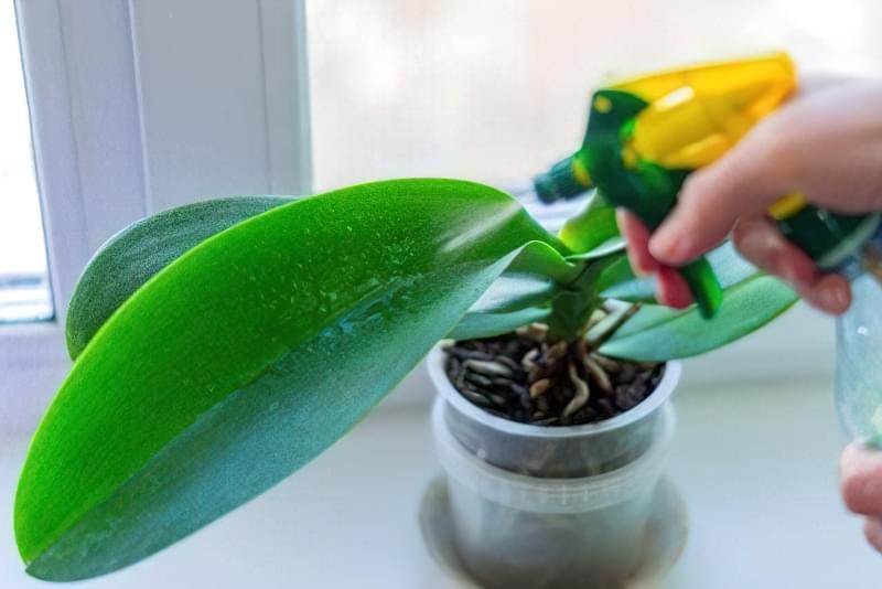 Як змусити орхідею зацвісти? 6 корисних порад 2