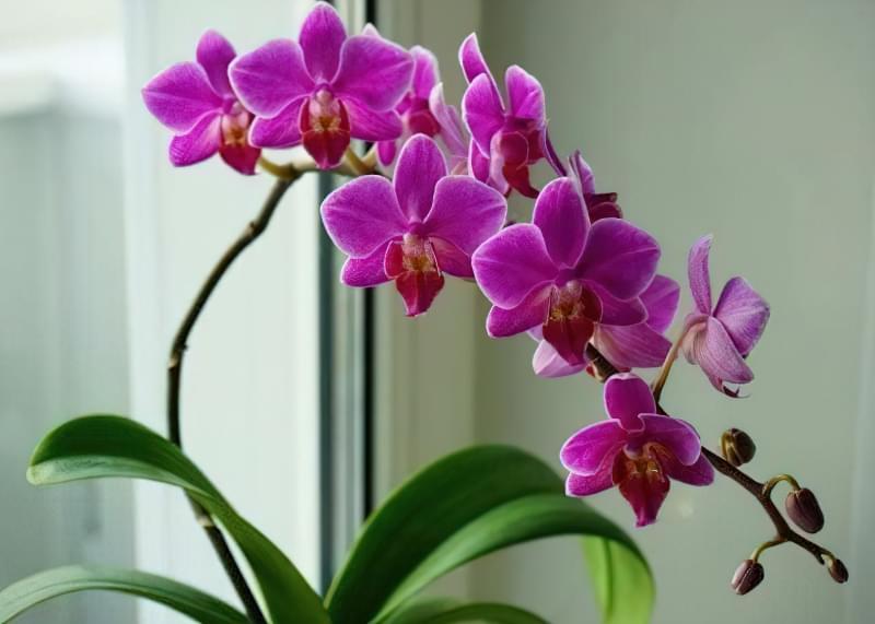 Як змусити орхідею зацвісти? 6 корисних порад 1
