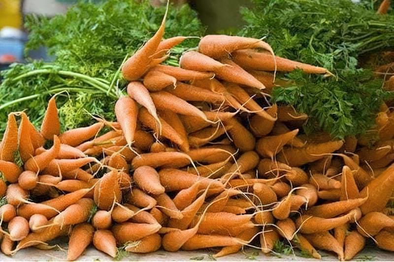 Чим підгодувати моркву і як отримати багатий урожай 1