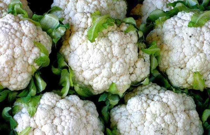 Цвітна капуста Альфа — опис раннього, врожайного і смачного сорту 1