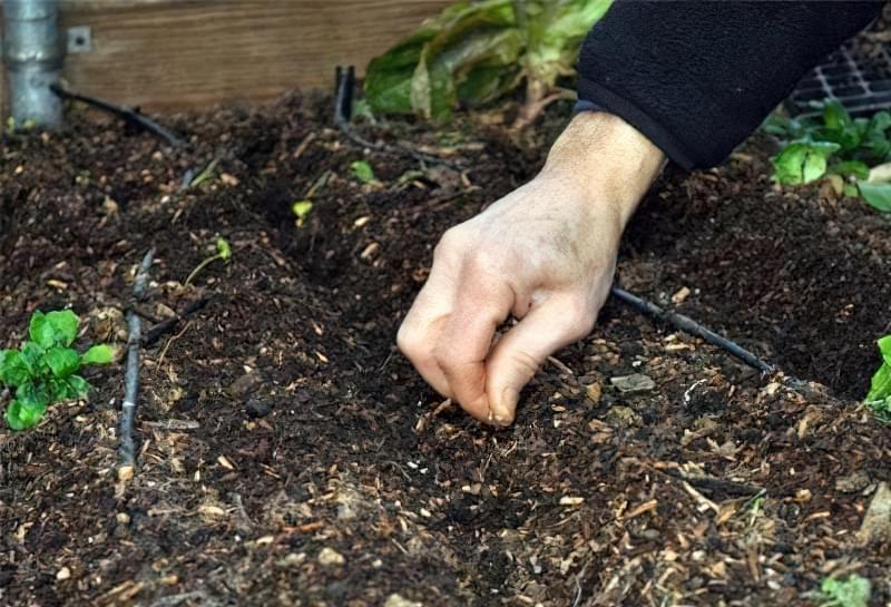 Підготовка місця під посадку бобових культур