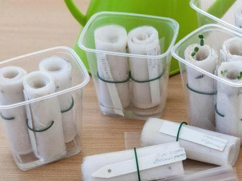 Паперовий равлик здатний забезпечити насіння необхідною кількістю тепла