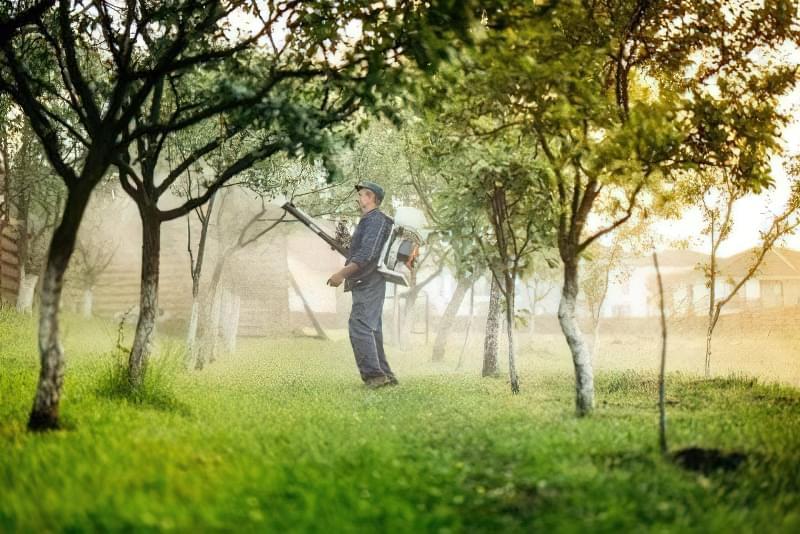 4 обов'язкових весняних обробки саду від хвороб та шкідників 1