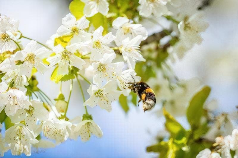 Квітки можуть запилюватися не тільки комахами