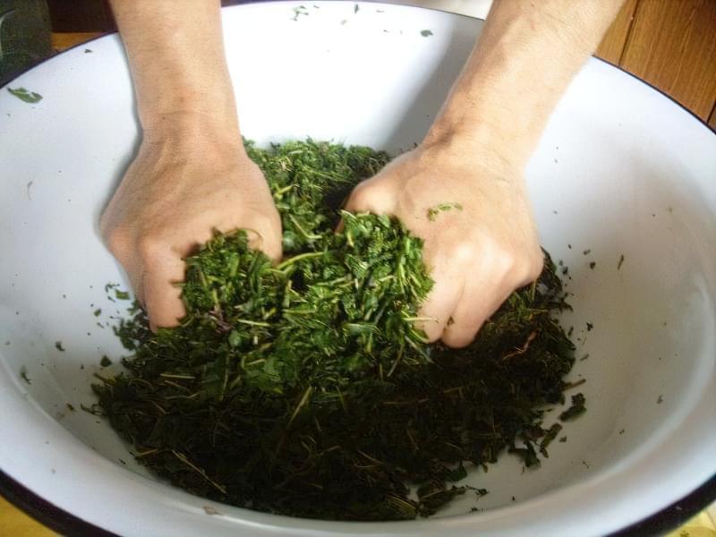 Виділення соку з листя смородини