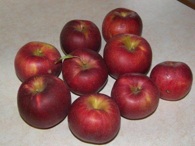Яблуня Джонатан
