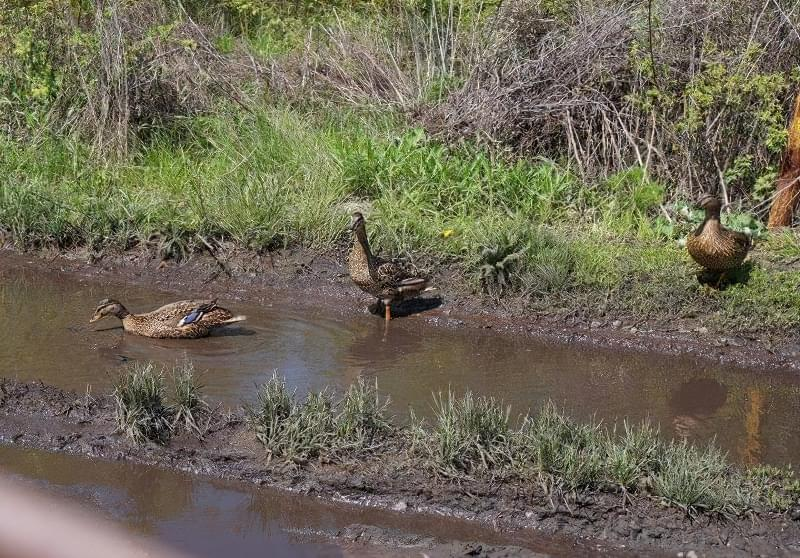 Весняне затоплення ділянки - як врятувати рослини? 2