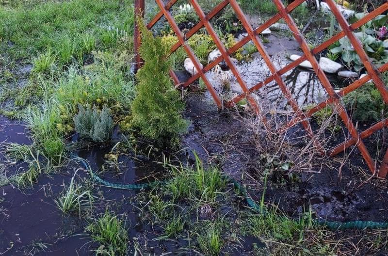 Весняне затоплення ділянки - як врятувати рослини? 3