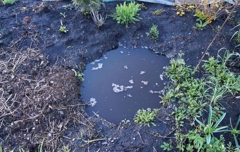 Весняне затоплення ділянки - як врятувати рослини? 4