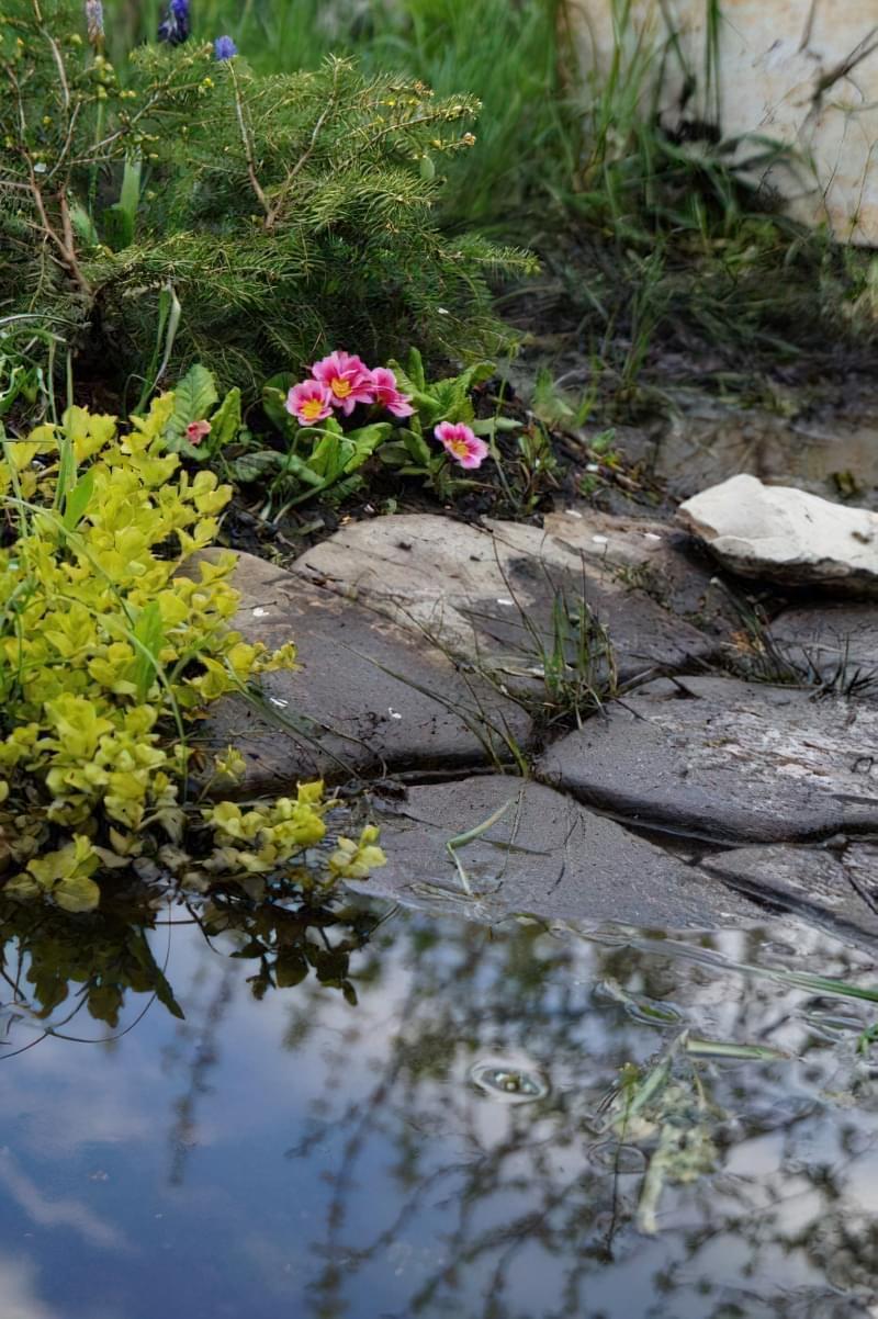 Весняне затоплення ділянки - як врятувати рослини? 5