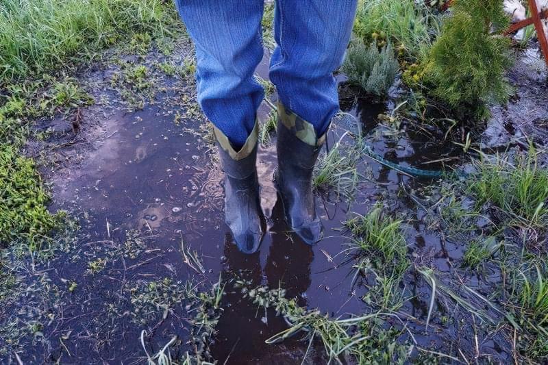 Весняне затоплення ділянки - як врятувати рослини? 1