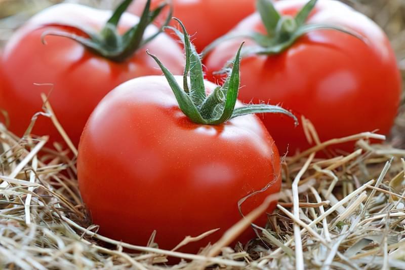 Як зберегти помідори свіжими? 1