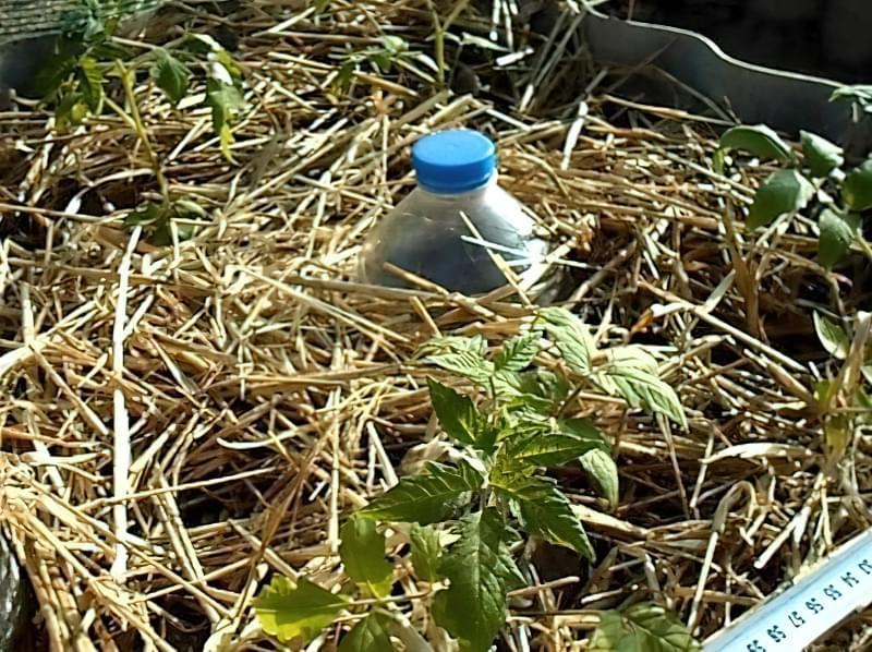 Як зробити крапельний полив своїми руками з пластикових пляшок 3