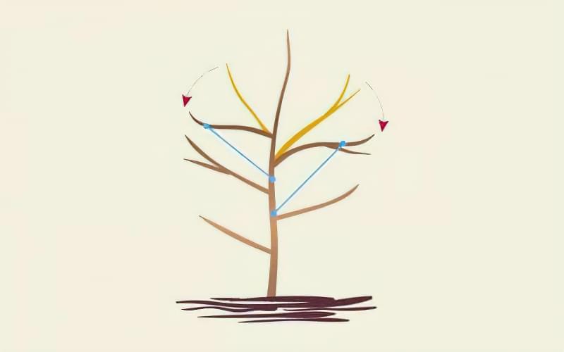 Формуюча обрізка яблуні — від саджанця до дорослого дерева 6