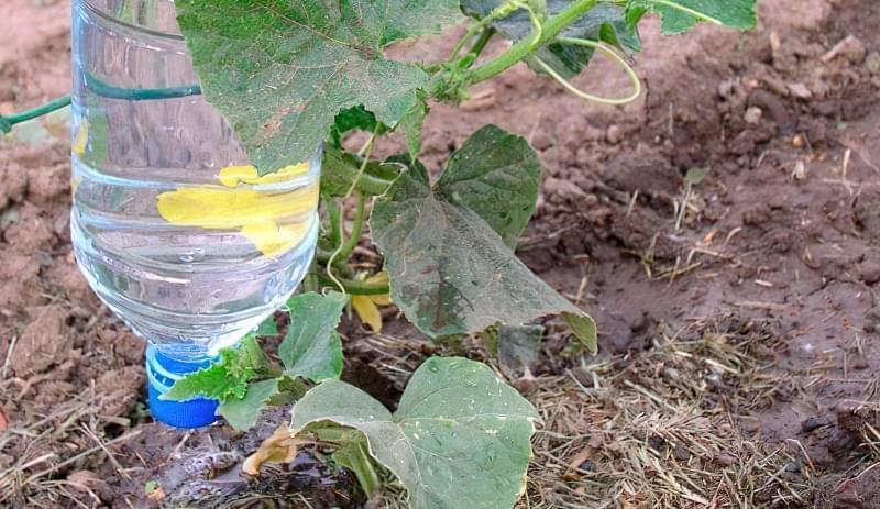 Крапельний полив з пластикових пляшок 2
