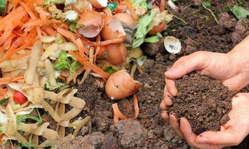 Органічні добрива – які бувають і як приготувати своїми руками? 2