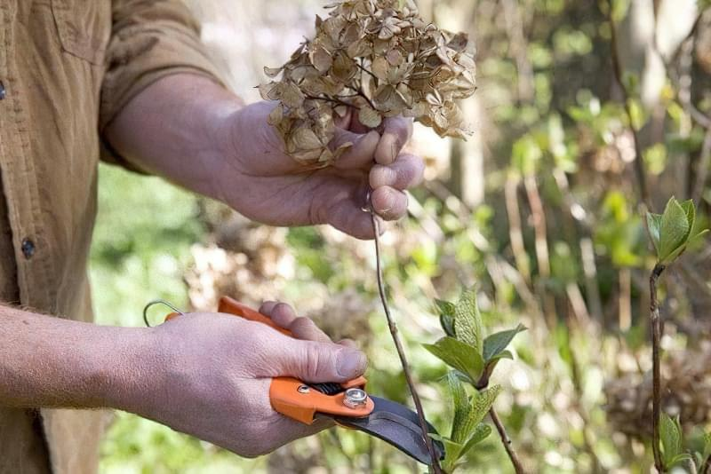 Весняна обрізка декоративних кущів і багаторічних квітів 3