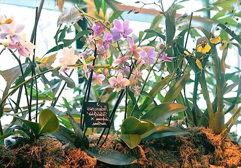 Що таке орхідні рослини? 2