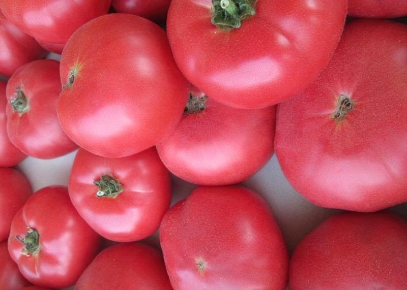Сорт томату Рожевий слон 3