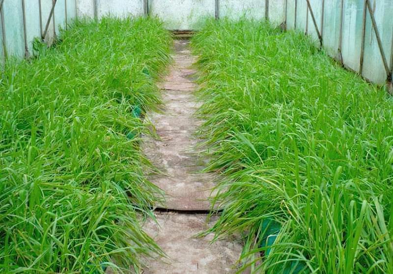 Які овочі садити після огірків на наступний рік? 2